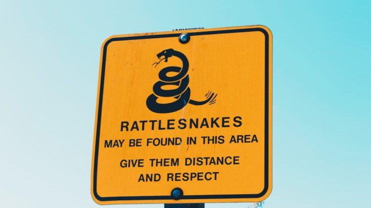snake: Fake Bitcoin Börsen