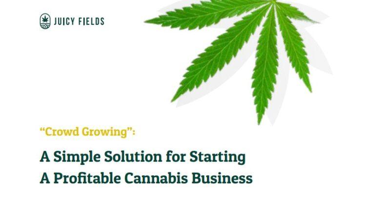 Legalisierung Hanf